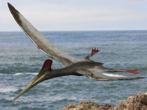 Pterodactylus_BW